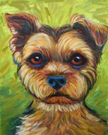 This Yorshire Terrier  makes a great pet portrait from photos. The  lime green background against the yorkie makes a great original oil painting of the pet.